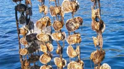 Beste Austern in Dubrovnik